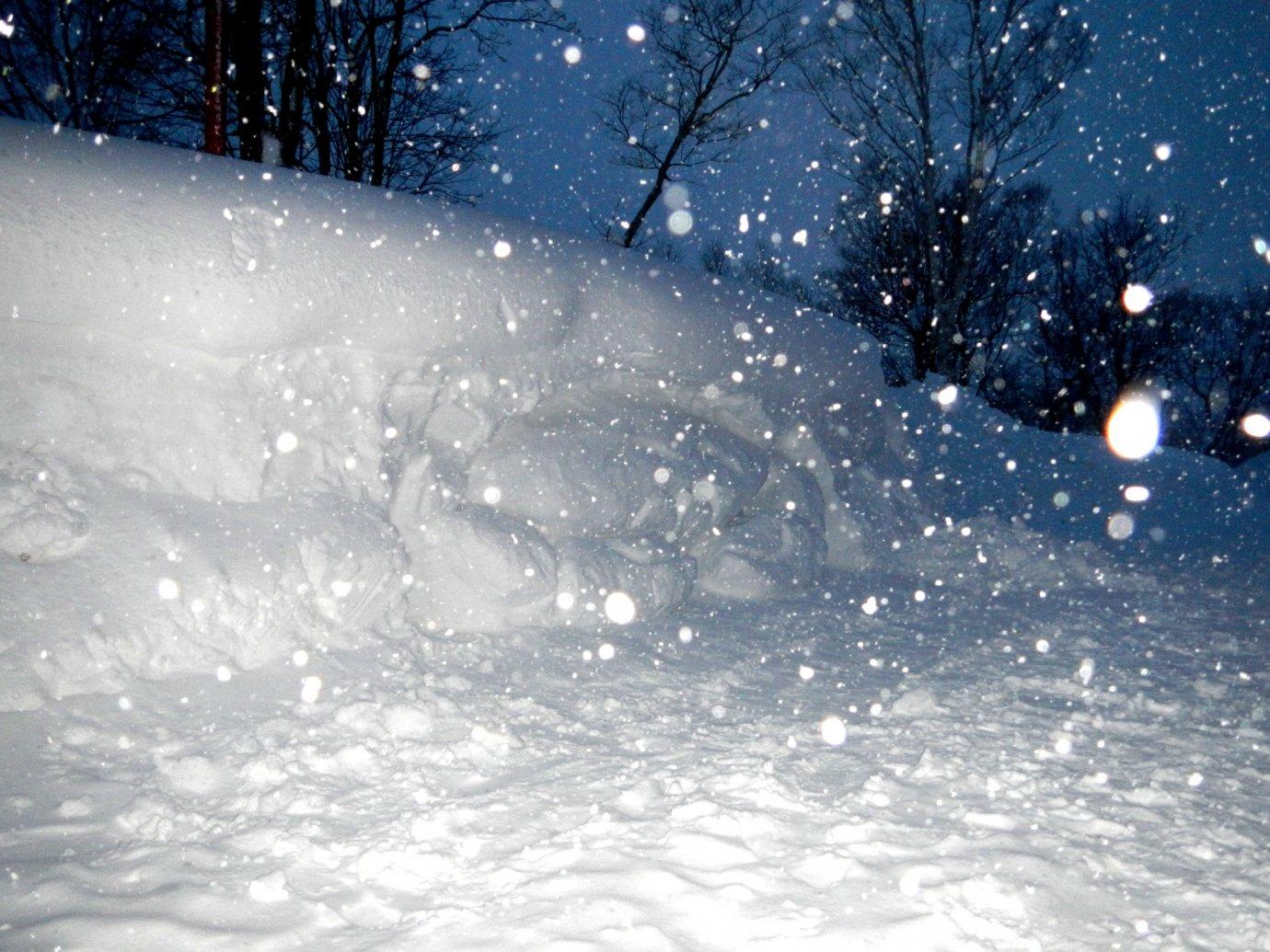 ニセコの雪壁でユノハナガニを掘り当てました